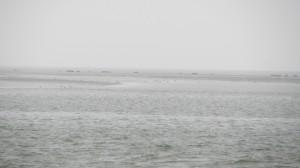 Zeehonden op een zandbank in de waddenzee